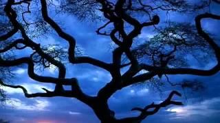 My Sweet Lady (with lyrics) John Denver -
