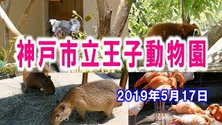 神戸市立王子動物園でコアラなどの可愛い動物たちを撮影してきました。 ...
