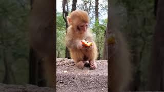 Monkey Life (3769)