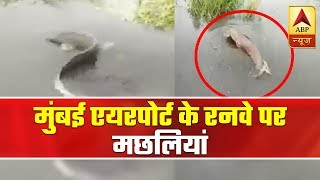 Fish Caught Swimming At Water-Logged Airport Runway In Mumbai | ABP News