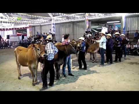 EXPO GANADERA VIRTUAL