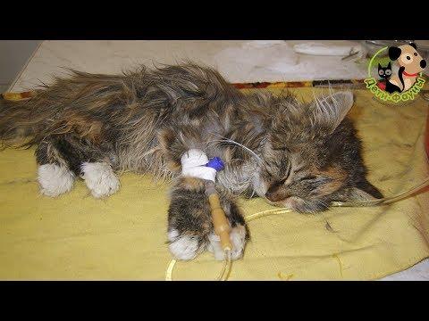 Болеют кошки чумкой
