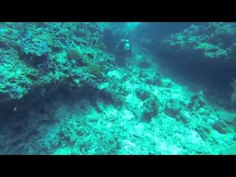 Liveaboard diving on M/Y Monsoon, Maldives