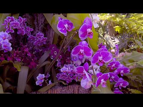 Orchidelirium - NYBG Orchid Show