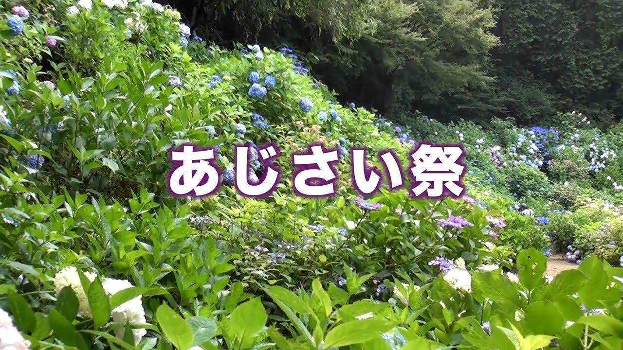 [2019-11-05]<br >茨城県下妻市-関東最古の八幡様:大宝八幡宮のあじさい祭