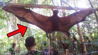 5 أنواع من الخفافيش يصعب تصديق وجودها !!