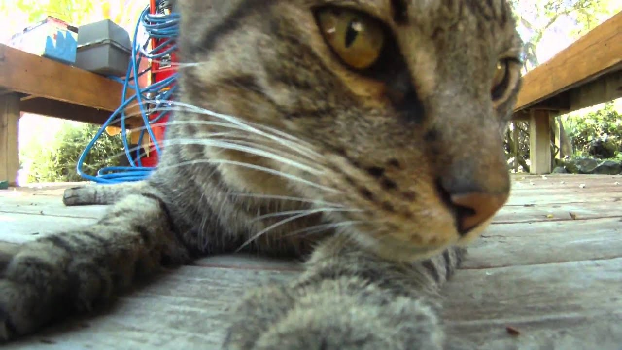 Gopro Hd Hero Cat Test Youtube