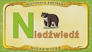 Multipedia Zwierząt. Litera N - Niedźwiedź