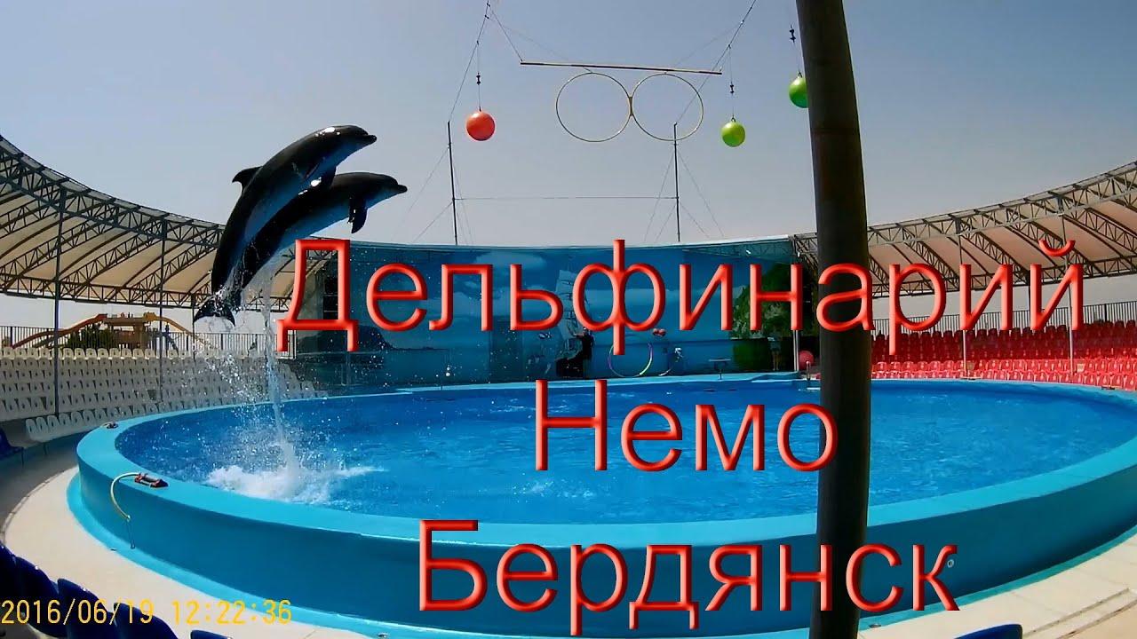 дельфинарий бердянск фото