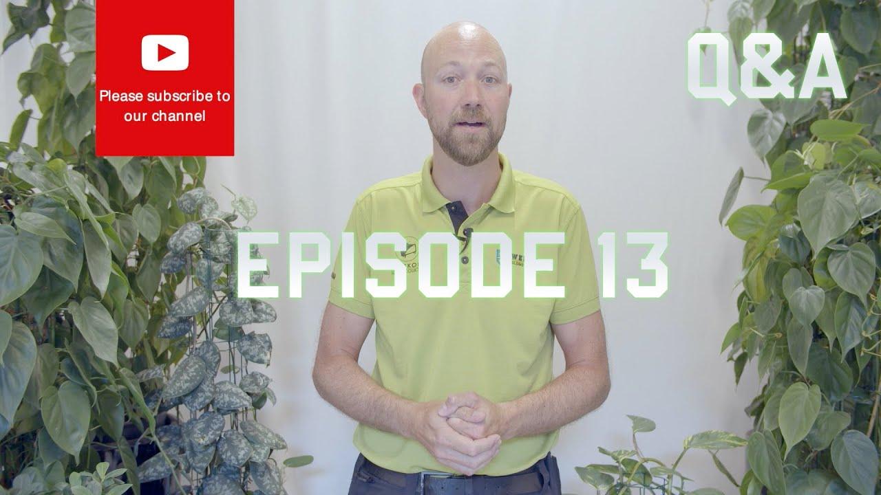Q&A Episode 13