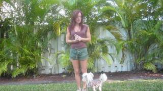 Positive Dogtraining - Teaching Heel To A Puppy