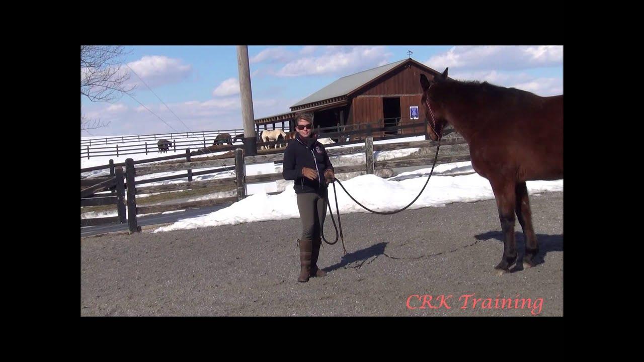 Basic body language with horses also youtube rh