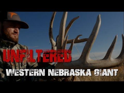 Western Nebraska Giant with a bow!