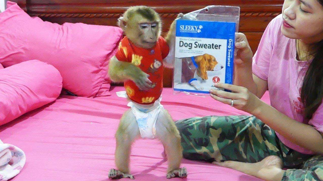 Wow Super Cute Monkey Dodo Very Surprise When Got A New Winter Shirt