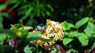 butterfly slow motion , Kelebek ağır çekim