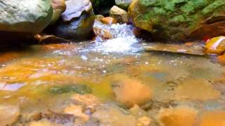 10 Hours of Babbling Brook, Creek Sounds, Water Stream ~ Relaxing Nature Sounds ~ Study, Deep Sleep