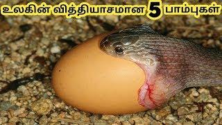 Baixar வித்தியாசமான பாம்புகள் || Different Snakes || Tamil Galatta News