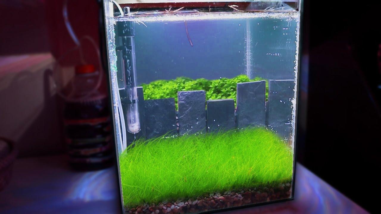 How To Making A Nano Crystal Red Shrimp Planted Aquarium Tonytanks Youtube