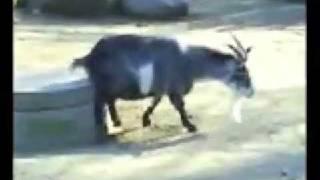extreme super duper tard goat