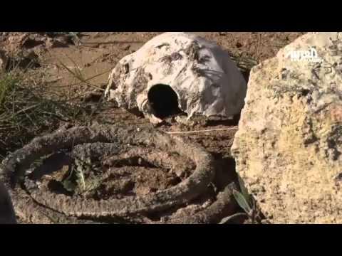 جرائم داعش في سنجار