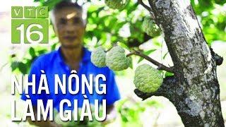 Ép na mọc quả từ thân cây: Nông dân lãi lớn | VTC16