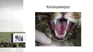 Ольга Сятковская - Респираторные инфекции кошек