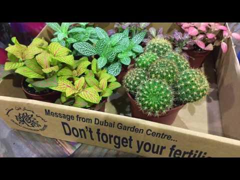 Dubai Garden Centre | Katie Te