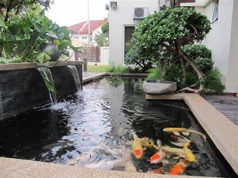 minimalist fish pond ideas create