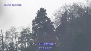山本山 オオワシ 飛翔 2019.2.21 thumbnail