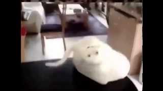 Кошки. Пугливые кошки видео онлайн(Кошки - удивительные домашние животные. Они могут быть веселыми и грустными, добрыми и злыми, игривыми и..., 2014-04-25T18:17:07.000Z)
