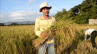 Youth Ag-Summit Video -  Rice Farming in Cambodia: An Example of Subsistence Agriculture
