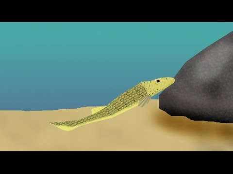 Fish Of The Silurian Period