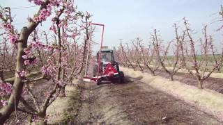 Darwin Mechanical Blossom Thinner - Peaches