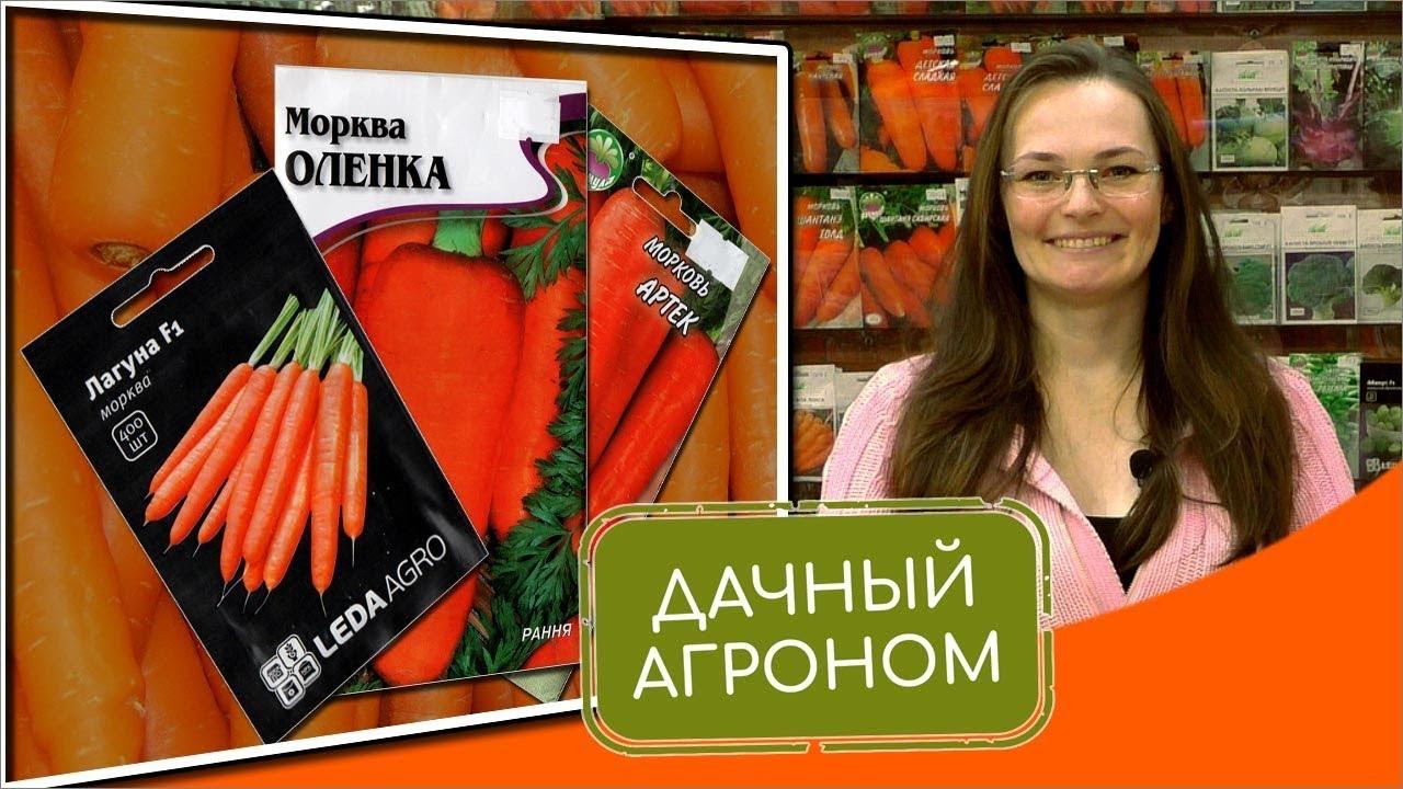 Топ-3 сортов моркови для подзимнего посева: Артек, Лагуна, Аленка