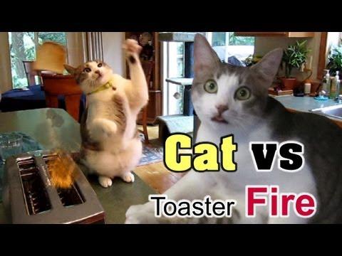 Toaster oven avanti t9