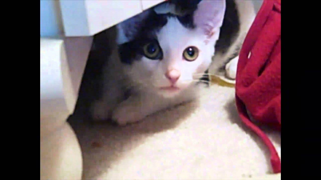 Killer Cat Ahhhh Youtube
