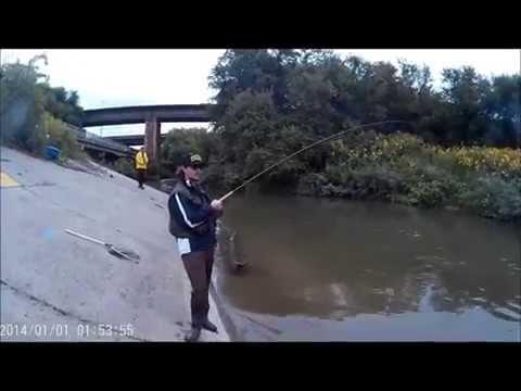 Lake Ontario (GTA) Salmon Run  2015