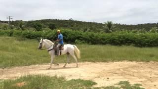 cavalo branco 17