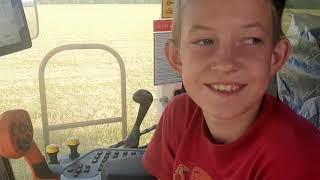 Комбайнер в 11 лет на новом Акросе молотит ячмень
