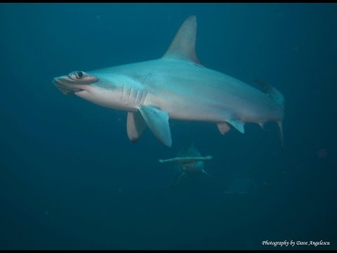 Coco Island: Diving with the Sharks