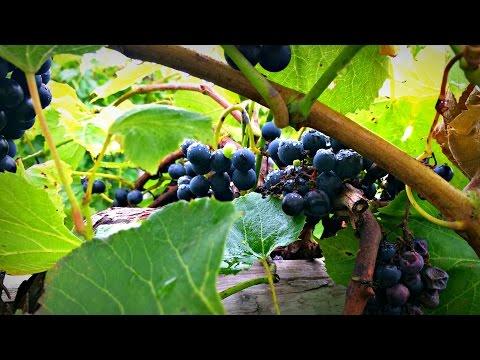 Western Iowa Wine Trail | Iowa Ingredient