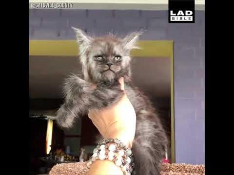 Unique Looking Cats Compilation