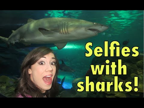 SELFIES WITH SHARKS! Mp3