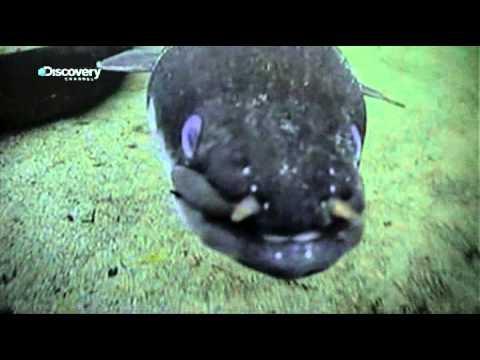 River Monsters - Eel