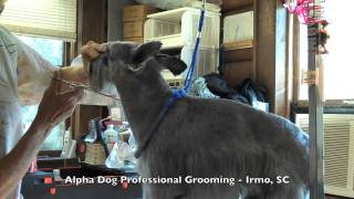 Grooming At Alpha Dog Professional Grooming Irmo, Sc