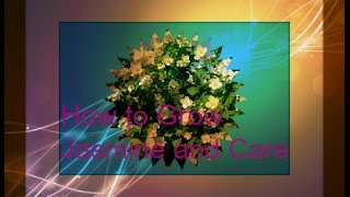 How to grow Jasmine plants tips and trick and care Indoors plants in Home Garden