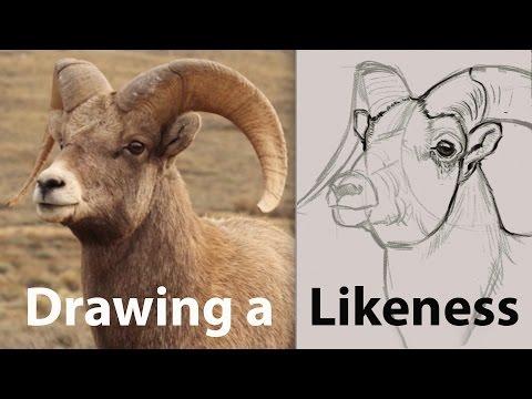 Drawing a Likeness
