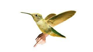 Der frühe Vogel... thumbnail