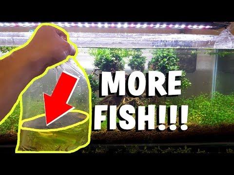 ADDING THE NEW FISH! - Bonsai Tree Aquarium