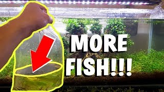 ADDING THE NEW FISH! - Bonsai Tree Aquarium